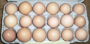 wyandotte chicken eggs